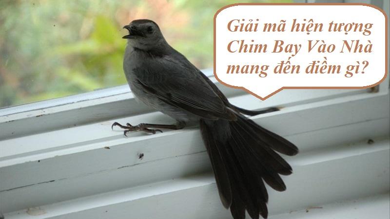 Chim bay vào nhà mang đến điềm lành hay dữ?