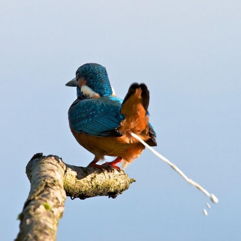 Chim bay vào nhà mang đến điềm lành hay dữ?Điềm báo phân chim rơi trúng đầu?