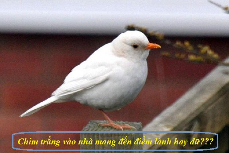 Chim bay vào nhà mang đến điềm lành hay dữ?Chim trắng bay vào nhà báo hiệu điều gì?