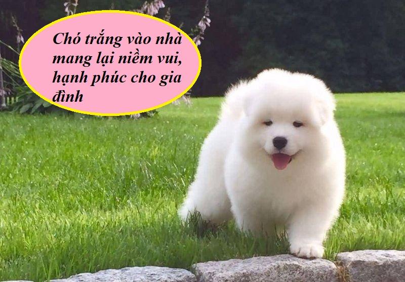 Chó vào nhà báo hiệu điều gì?Chó trắng vào nhà mang đến niềm vui, may mắn cho gia chủ