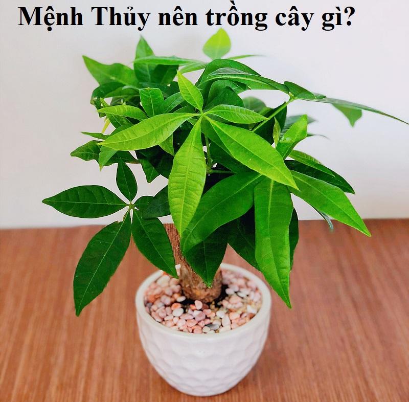 Mệnh Thủy hợp cây gì, kỵ cây gì? Mệnh Thủy nên trồng cây gì?