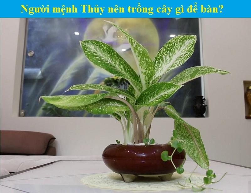 Mệnh Thủy nên trồng cây gì, hợp cây gì? Gợi ý những loại cây hợp mệnh Thủy