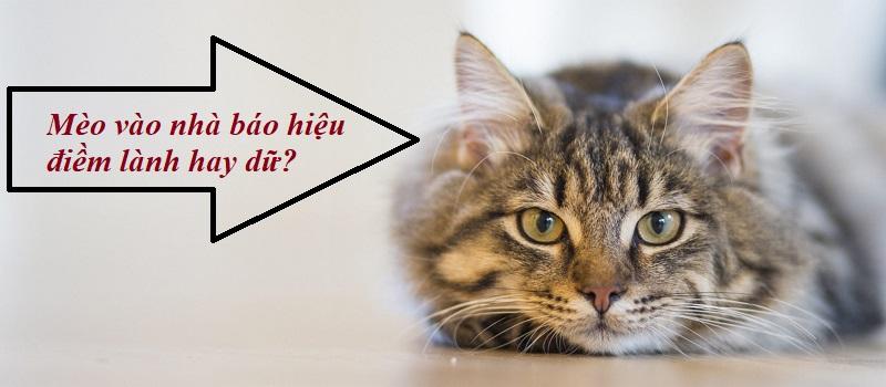 Mèo vào nhà báo hiệu điềm lành hay điềm dữ?