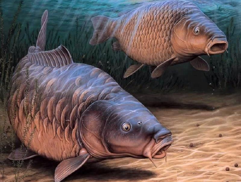 Mơ thấy cá chép là điềm báo gì? Mơ thấy cá chép đen