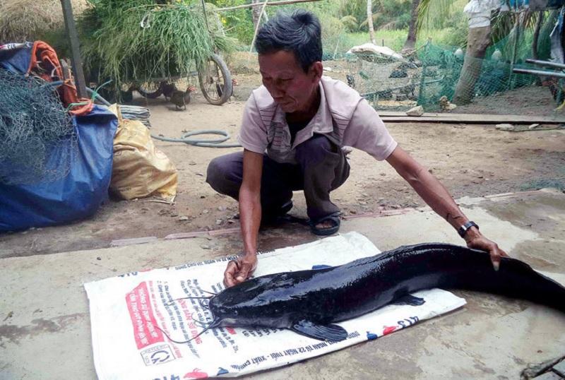 Mơ thấy cá trê đen Đánh con gì? Mơ thấy cá trê đánh con gì?