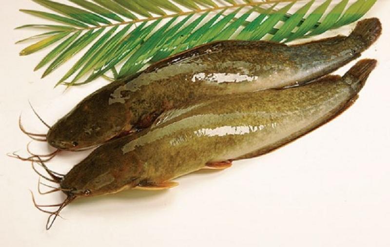 Mơ thấy cá trê đánh con gì? Mơ thấy cá trê có tốt hay không?
