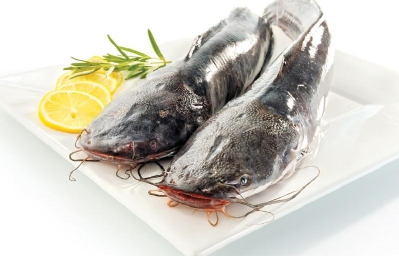 Mơ thấy cá trê đánh con gì? Mơ thấy ăn cá trê đánh con gì?