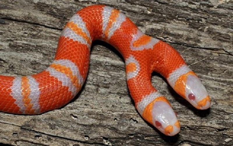 Mơ thấy rắn là điềm báo tốt hay xấu?