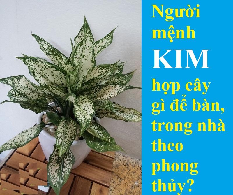 Người mệnh Kim hợp trồng cây gì?
