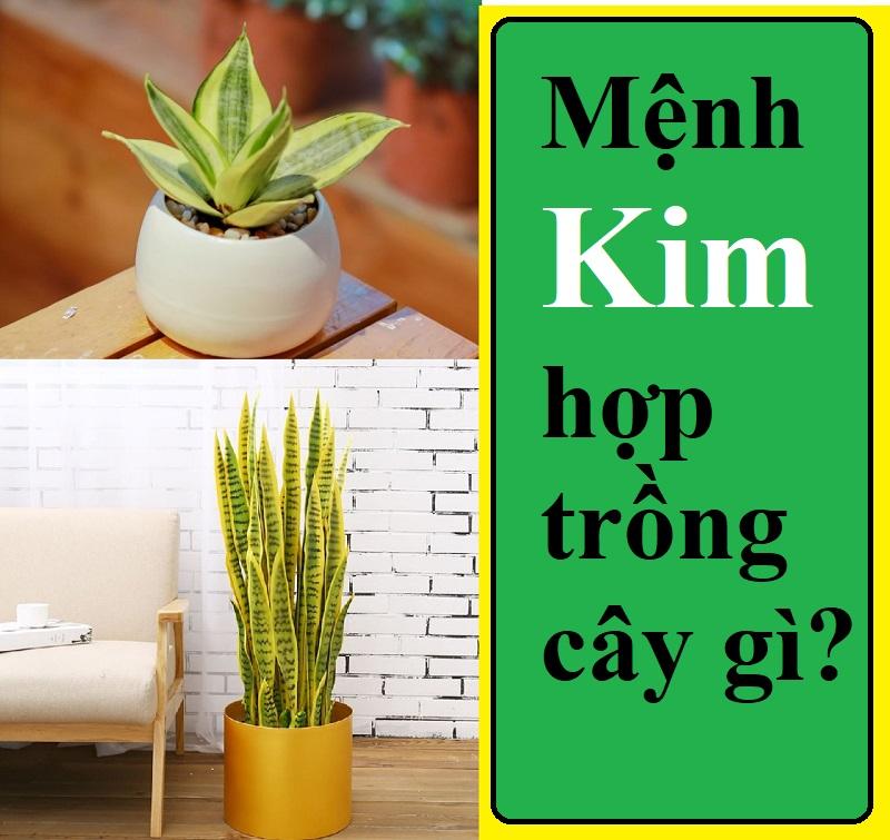Người mệnh Kim nên trồng cây gì? Những loại cây hợp phong thủy với người mệnh Kim
