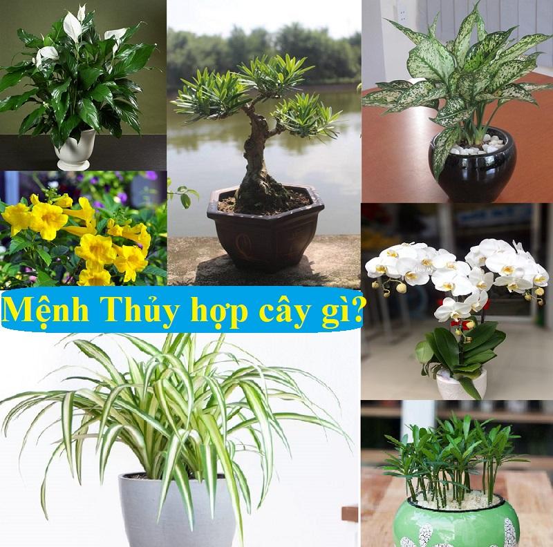 Người mệnh Thủy nên trồng cây gì?