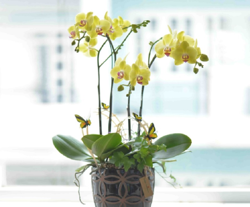 Người tuổi Tuất hợp cây phong thủy nào? Tuổi Bính Tuất nên trồng cây phong thủy nào?