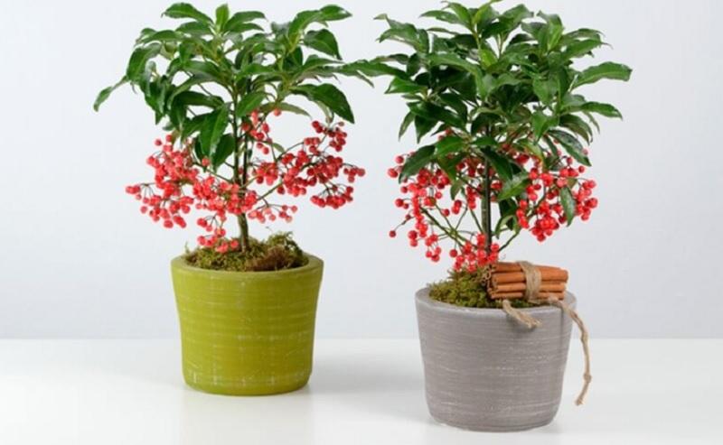 Người tuổi Tuất hợp cây phong thủy nào? Tuổi Tuất nên để cây gì trong nhà?