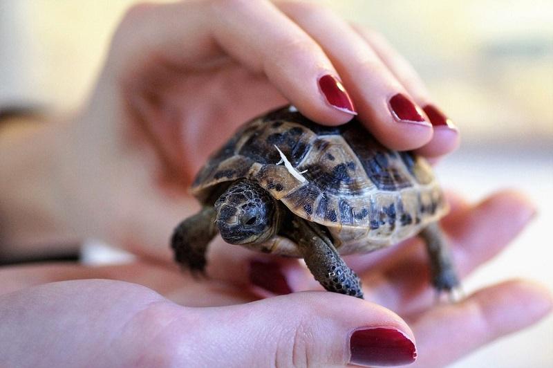Nằm mơ thấy rùa đánh con gì?