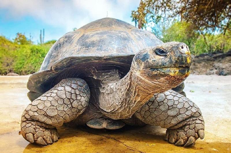 Nằm mơ thấy rùa có ý nghĩa gì?
