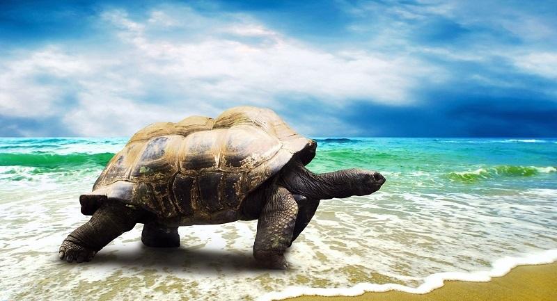 Đánh con gì khi mơ thấy rùa?
