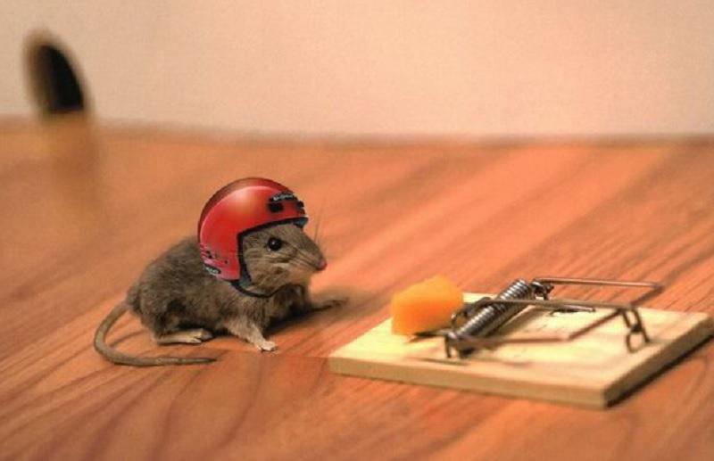 Bị chuột cắn là điềm lành hay xấu? Mơ thấy chuột nên đánh đề con gì?