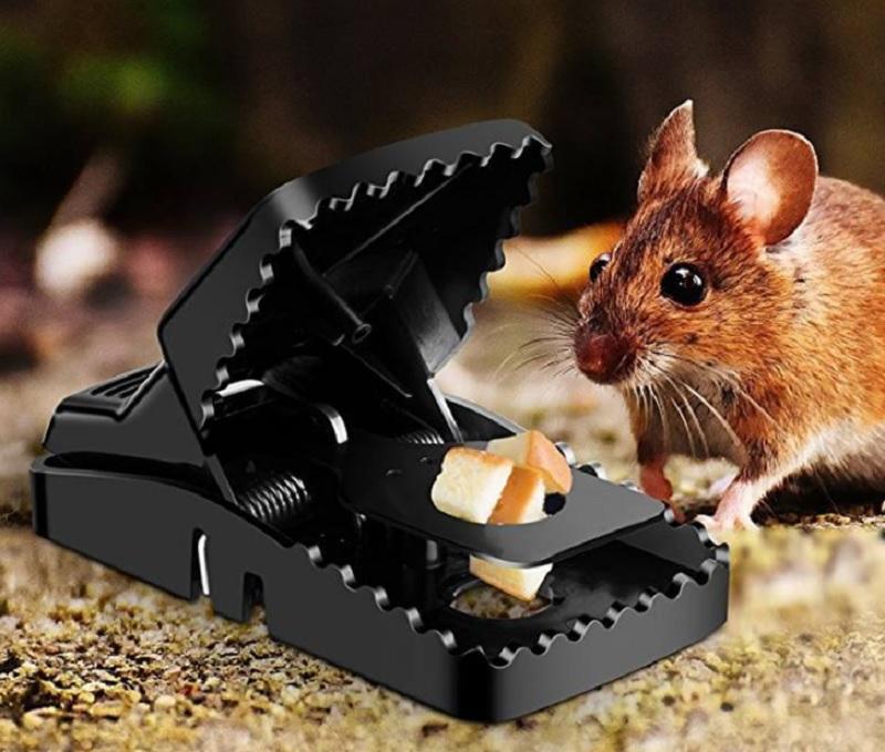 Bị chuột cắn là điềm lành hay xấu? Bị chuột cắn chân là tốt hay xấu?