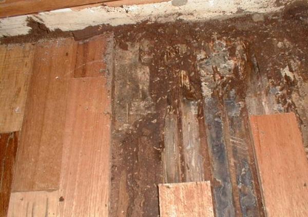 Mối làm tổ trong nhà điềm báo gì? Mối phá hoại tài sản, công trình của ngôi nhà