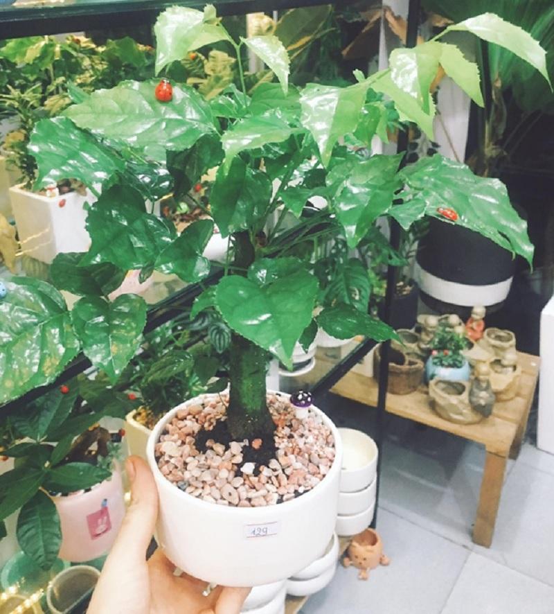 Tuổi 1992 nên trồng cây nào hợp mệnh. Mệnh Kim hợp cây gì?