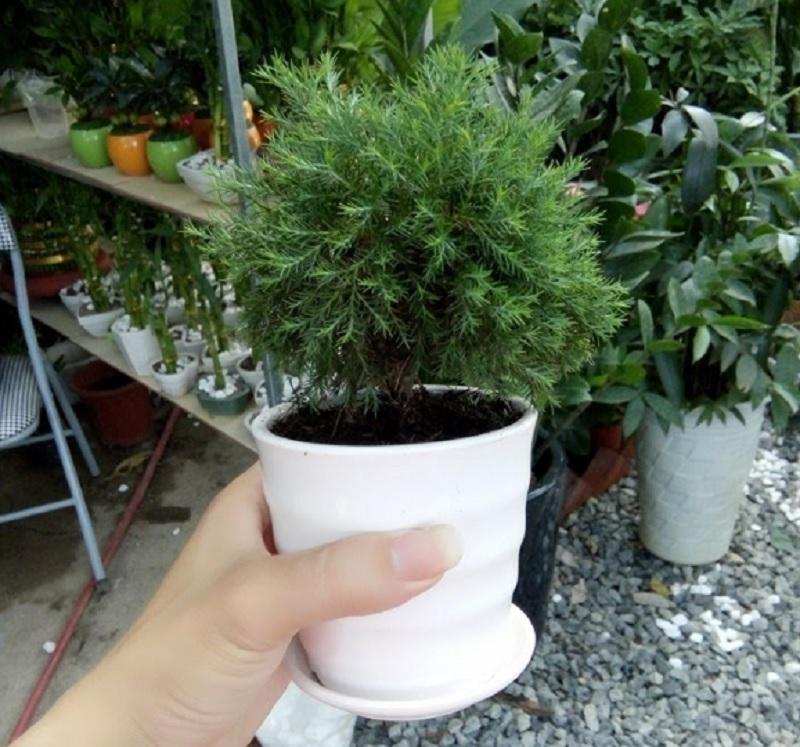 Tuổi 1992 nên trồng cây nào hợp mệnh. Cây hợp tuổi Nhâm Thân