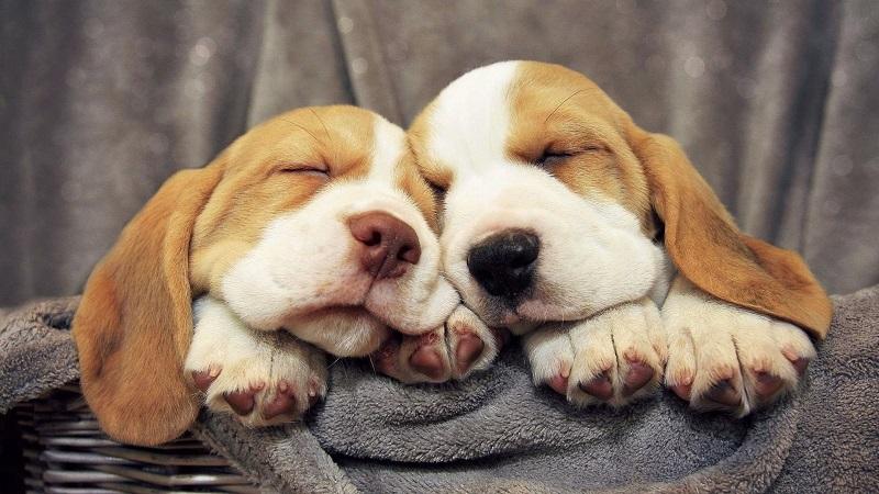 Nằm mơ thấy chó đánh số mấy trúng lớn?