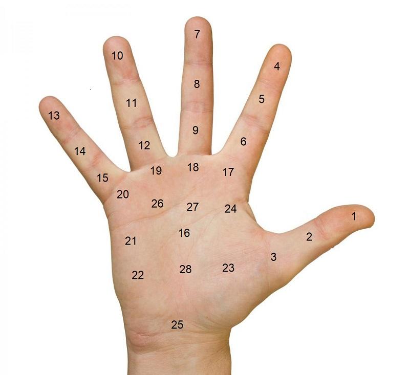 Ý nghĩa nốt ruồi trong lòng bàn tay, giải mã vị trí các nốt ruồi trong lòng bàn tay