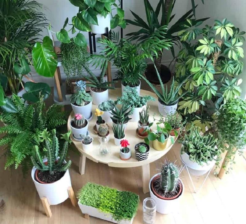 Đồ phong thủy nên đặt trong nhà. Nên trồng cây phong thủy nào trong nhà