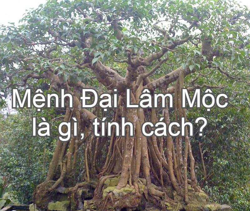 Mệnh Đại Lâm Mộc là gì, hợp màu gì, cây gì, mệnh nào?