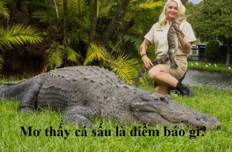 Mơ thấy cá sấu là điềm báo gì? Ngủ mơ thấy cá sấu trên bờ đánh con gì?