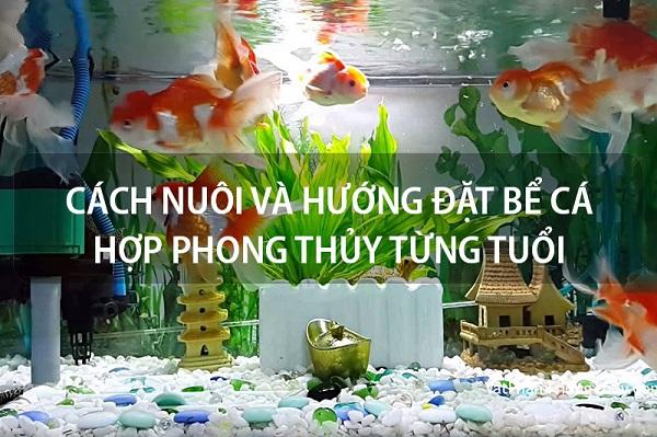 Nguyên tắc chọn vị trí đặt bể cá