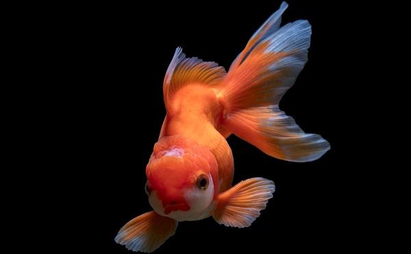 Nguyên tắc chọn số lượng cá khi nuôi