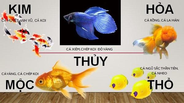 Nguyên tắc chọn màu sắc của cá phong thủy khi nuôi