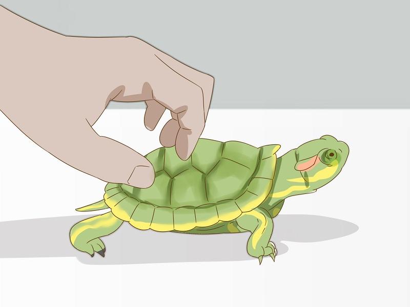 Rùa bò vào nhà đánh con gì trúng lớn?