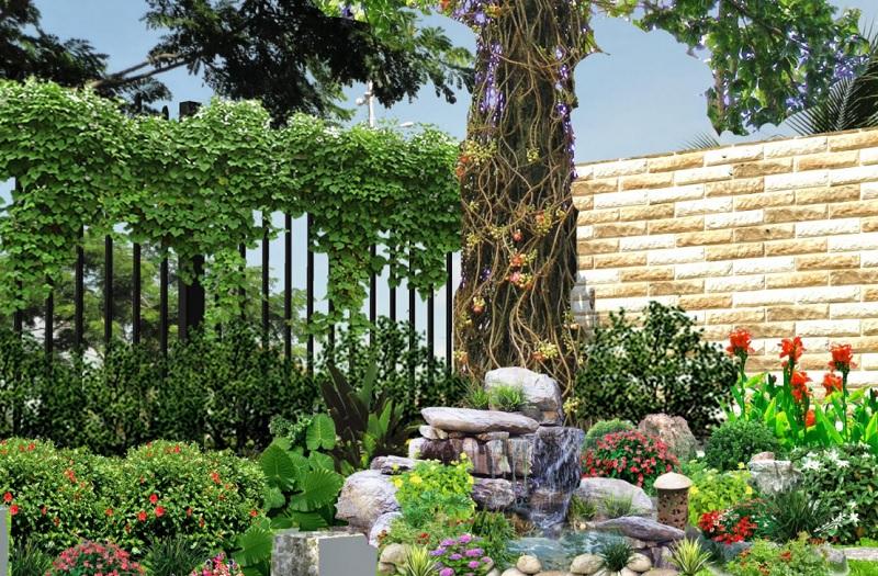 Có nên trồng cây Sala trước nhà không? Cây sala có tác dụng gì?