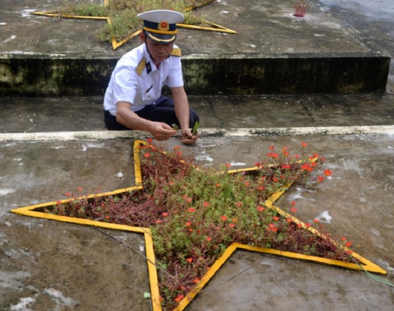 Có nên trồng hoa mười giờ trên mộ? Trồng cây gì ở lăng mộ?