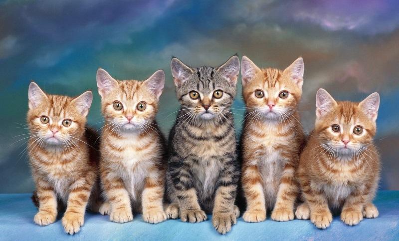 Nằm mơ thấy mèo dự báo điềm gì