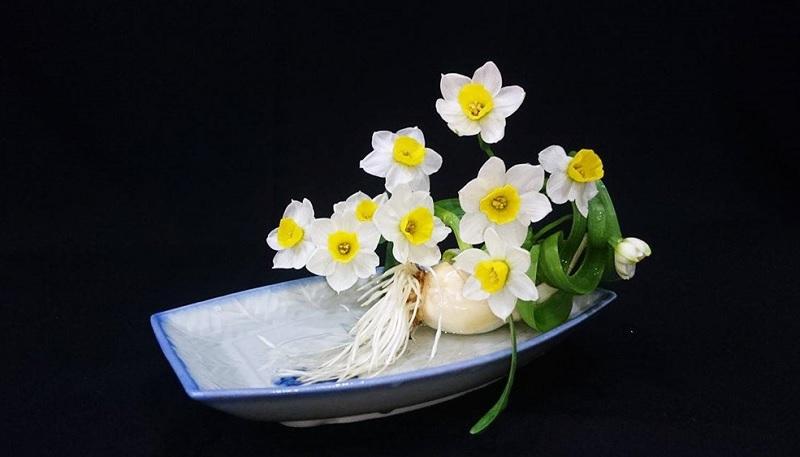 Những loại cây không nên trồng trong nhà. Nên và không nên trồng cây gì trong nhà? Hoa thủy tiên