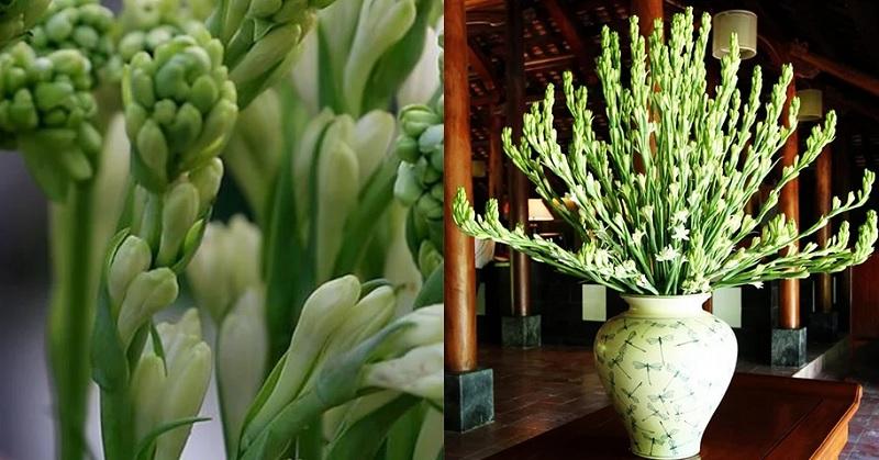 Ngày tết nên cắm hoa gì? Bàn thờ ngày tết nên cắm hoa gì?