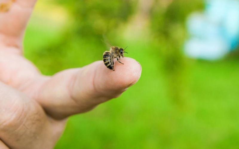 Bị ong đốt là điềm gì? Mơ bị ong đốt là điềm gì?