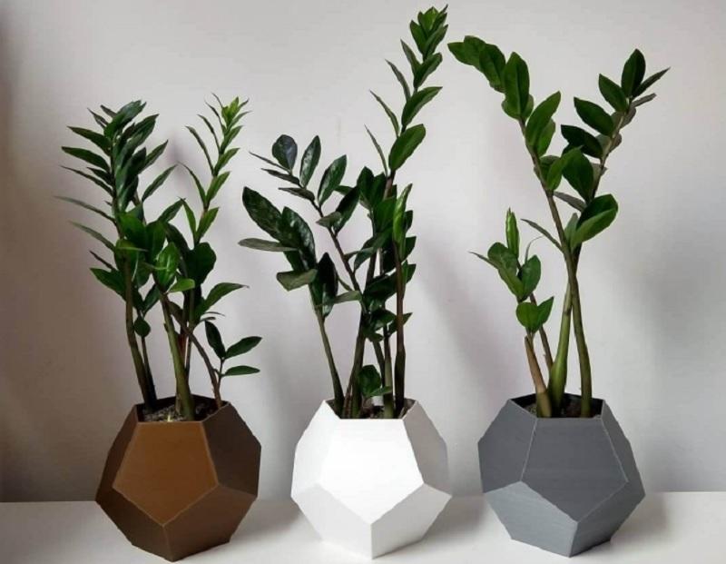 Cây phong thủy để bàn nên trồng. Cây phong thủy để bàn theo tuổi