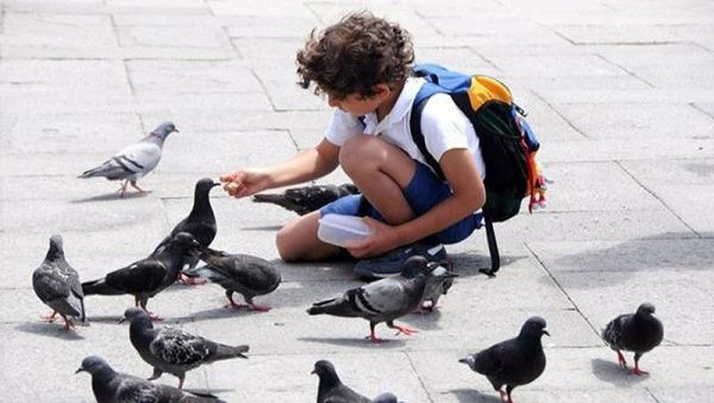 Chim bồ câu bay vào nhà dự báo điềm gì?
