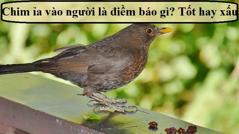 Chim ỉa vào người là điềm báo gì?