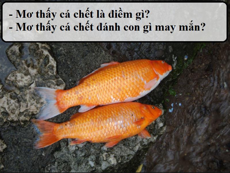 Mơ thấy cá chết là điềm báo gì?