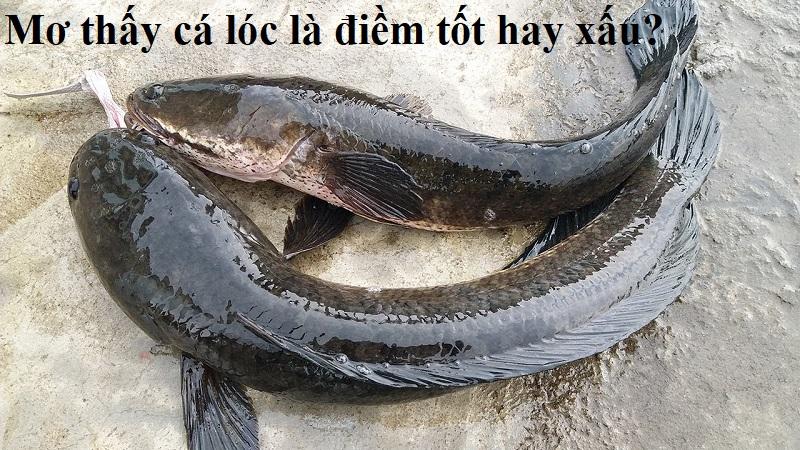 Mơ thấy cá lóc là điềm gì?