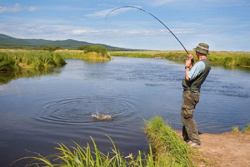 Nằm mơ thấy câu cá đánh con gì?