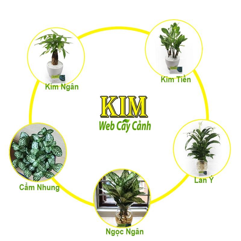 Người mệnh Kim nên trồng cây gì trong nhà?
