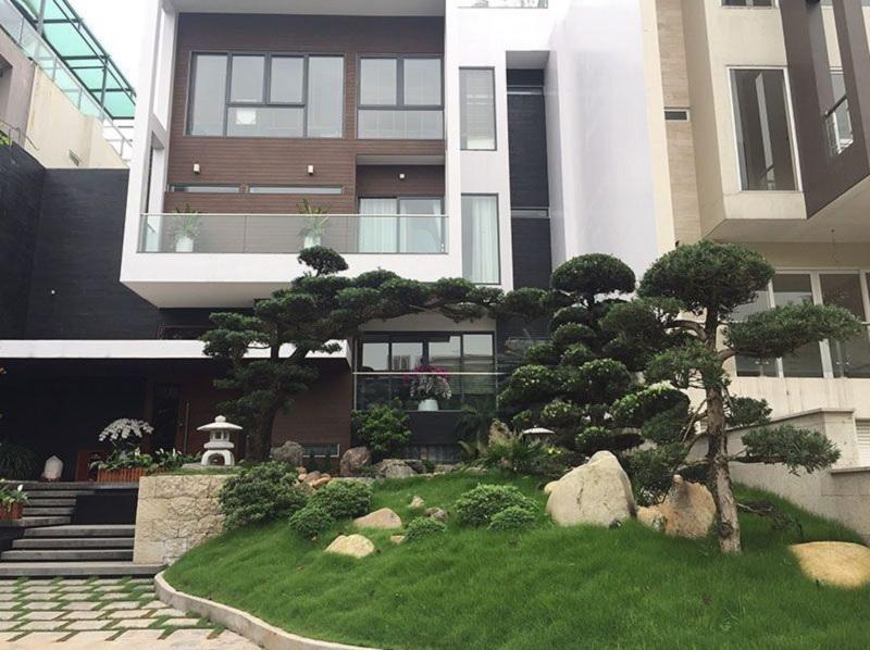 Trồng cây tùng trước nhà. Có nên trồng cây tùng trước cửa nhà?