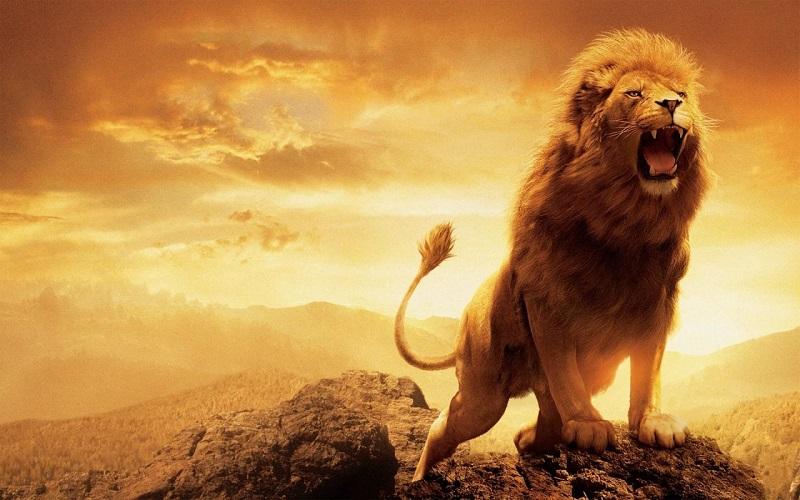 Nằm mơ thấy sư tử là điềm báo gì, đánh con gì?