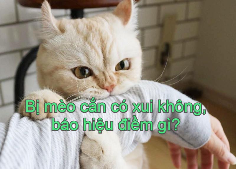 Bị mèo cắn có xui không, phải làm sao? Cách xử lý khi bị mèo cắn